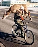 Deer on Bike